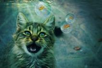 cat-2288075_1920