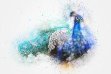 bird-2424077_1920
